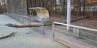Kiefernsterben am Sportpark Oberlinden - Baum
