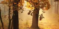 Herbstlicher Wald - Brahms Requiem