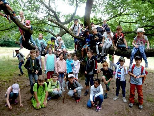 Naturunterricht im Wald - Walderlebniswochen