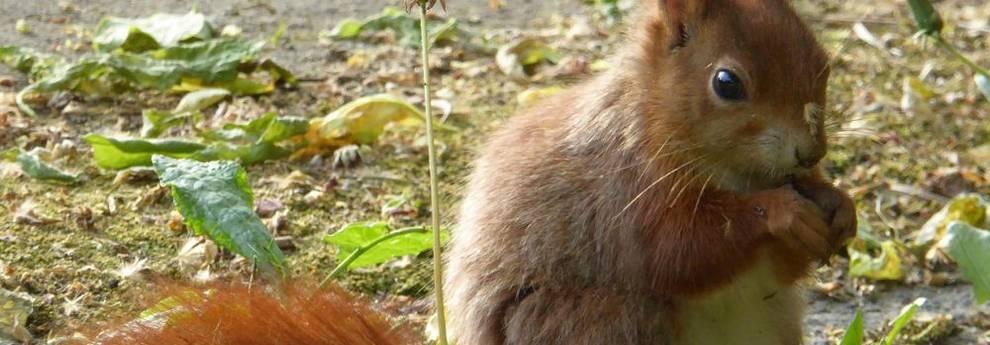 Natur-Oase Friedhof - Eichhörnchen