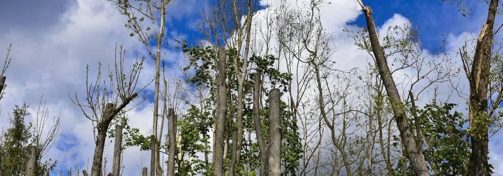 Sturmschaden Wald