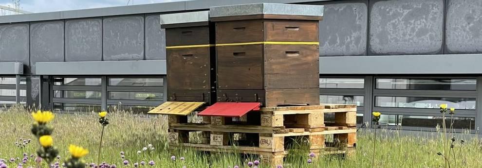 Bienenstöcke Stadthalle